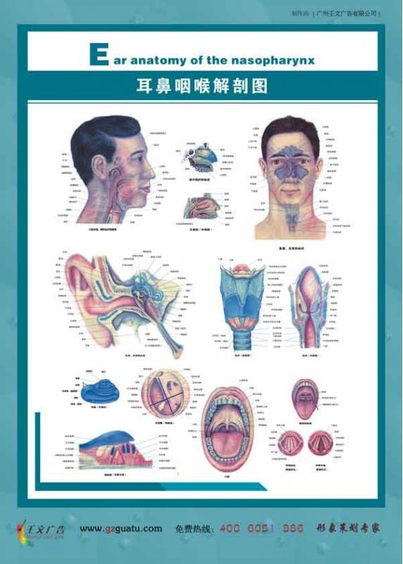 五官科健康教育_耳鼻咽喉解剖图(三)